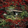 Japanese Garden, Through Acer In by The Irish Image Collection