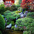 Japanese Garden With Pagoda And Pond by Carol Groenen