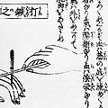 Japanese Illustration Of Moxa by Science Source