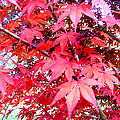 Japanese Maple Leaves 11 In The Fall by Duane McCullough