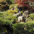 Japanese Tea Gardens San Francisco by Richard Reeve