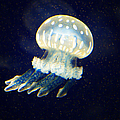 Jelly Fish by Randy Harris