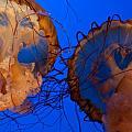 Jelly Roll by Sheri Bartoszek