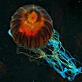 #jellyfish #instadroid #andrography by Kel Hill