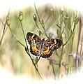 Jewel In The Marsh by Carol Groenen