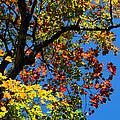 Jewels Of Autumn by Rachel Cohen