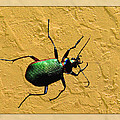 Jeweltone Beetle by Debbie Portwood