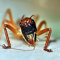 Jiminy Cricket by Kaye Menner