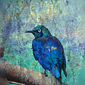 Josh's Blue Bird by Trish Tritz