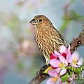 Joy Of Spring by Betty LaRue