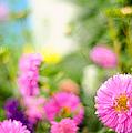 Joy Of Summer Time by Jenny Rainbow