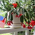 July Cactus With Old Glory by Peggy Wilburn