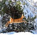 Jumper by Lloyd Alexander