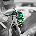 Junebug by Mariola Bitner