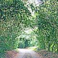 Jungle Drive Avery Island La by Lizi Beard-Ward
