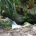 Jungle Falls by Cheryl Matthew