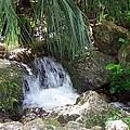 Jungle Falls II by Cheryl Matthew
