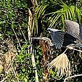 Jungle Flight by Joseph Yarbrough