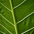 Jungle Leaf by Blake Webster