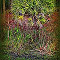 Jungle Palm by Susanne Van Hulst