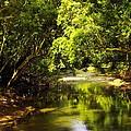 Jungle Stream Below The Secret by John Greaves