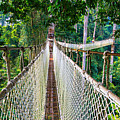 Jungle Walk From High Above by Feng Wei Photography
