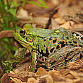 Just A Frog by Paul Ward