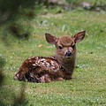 Just Born Bambi by Kym Backland