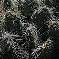 Just Cactus