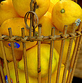 Just Lemons by Caroline Stella