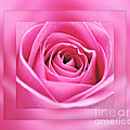 Just Pink by Kaye Menner
