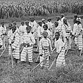 Juvenile Convicts At Work In The Fields by Everett