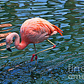 Jw Marriot Flamingo by Tommy Anderson