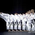 Karate Expert by Ted Kinsman