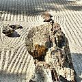 Karesansui - Dry Landscape Garden by Lynnette Johns