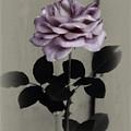 Kathleen's Garden Rose by Linda Dunn