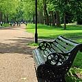 Kensington Park Bench by Sophie Vigneault