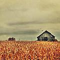 Kentucky Corn Field by Darren Fisher