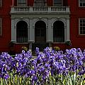 Kew Garden Irises by Mike Nellums