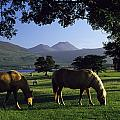 Killarney,co Kerry,irelandtwo Horses by The Irish Image Collection