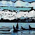 Killer Whales by George Pedro