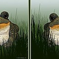 King Frog - Gently Cross Your Eyes And Focus On The Middle Image by Brian Wallace