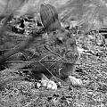 King Hare by Lloyd Alexander