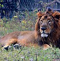 King Of Zoo by Rajinder Wadhwa