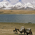 Kirghiz Nomad Leads Bactrian Camels by Gordon Wiltsie