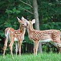 Kiss Me Deer by Kathy Gibbons