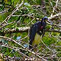 Kissimmee Bird 2 by Richard P Davis