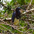 Kissimmee Bird by Richard P Davis
