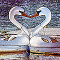 Kissing Swans by Alice Gipson