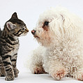 Kitten & Pup Confrontation by Mark Taylor